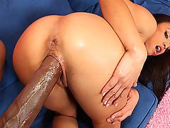 ass fucking black cock